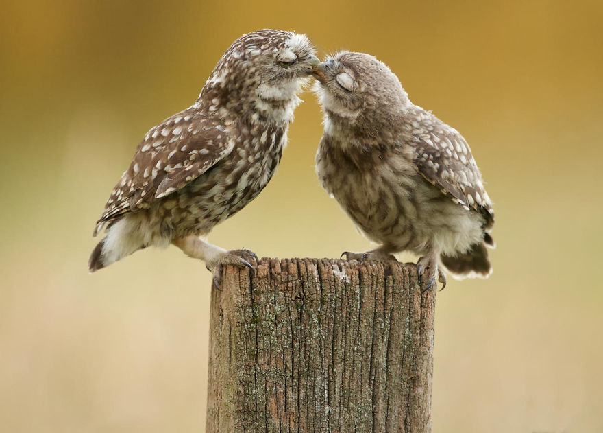 אהבה זה החלק הקל, טוב נו אין באמת קל