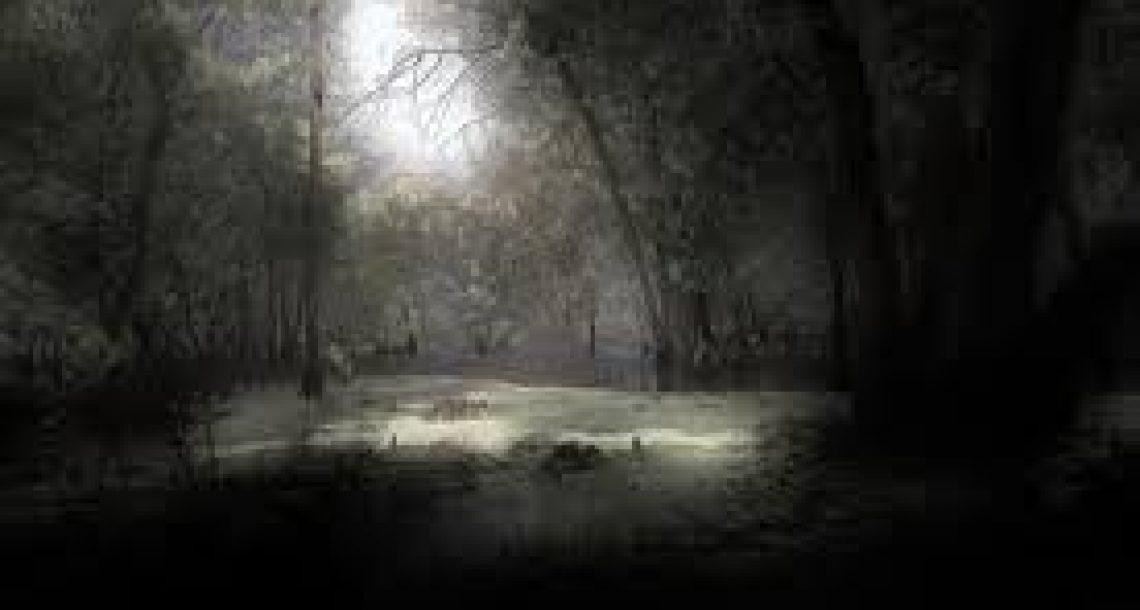 """יערות קק""""ל בלילות – סקס ביער זה תמיד הכי כיף"""
